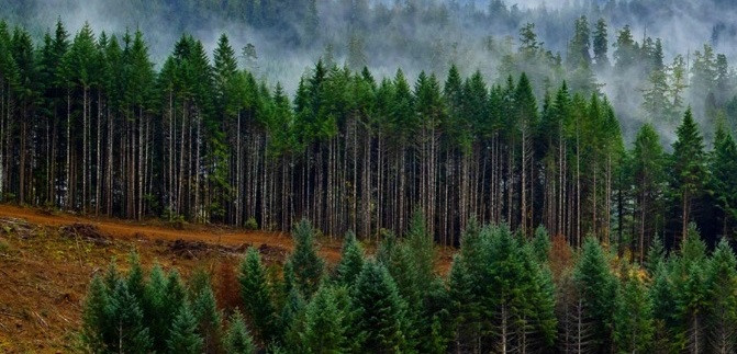 Roseburg Forest Products acquired more than 12 thousand hectares of forest in the southeastern United States